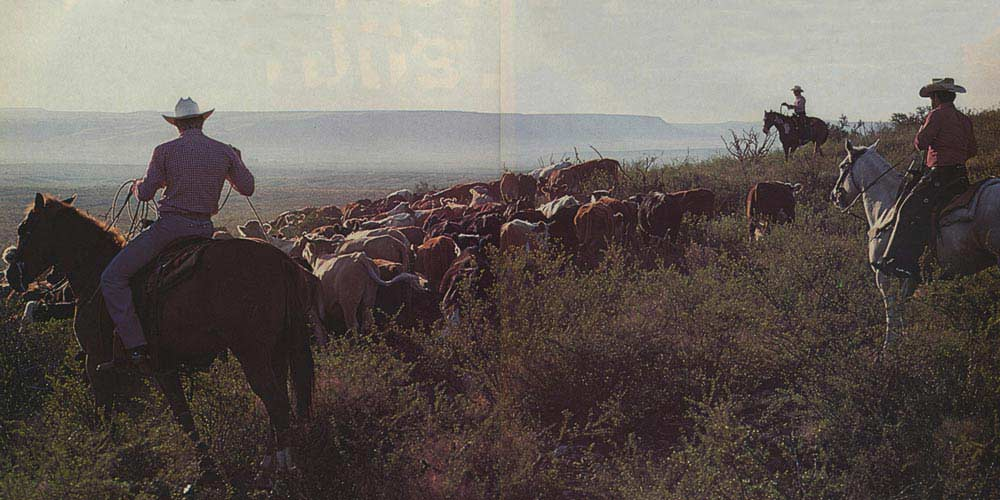 a grainy picture of cowboys herding cattle